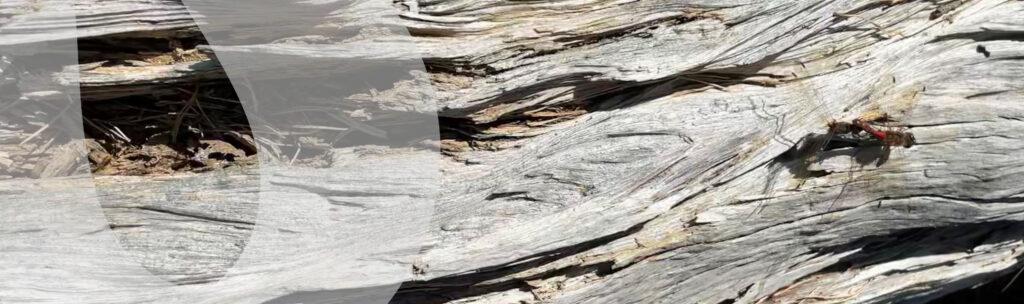Wood_Learningpoint.se